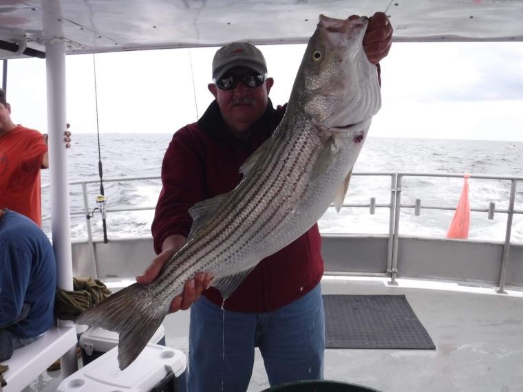striper-Sea Hunter