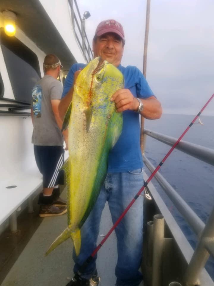 Jamaica Sept. dolphin