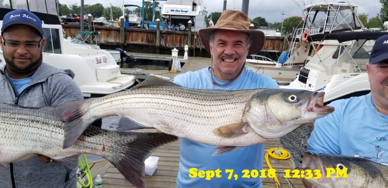 Katfish Sept. striper