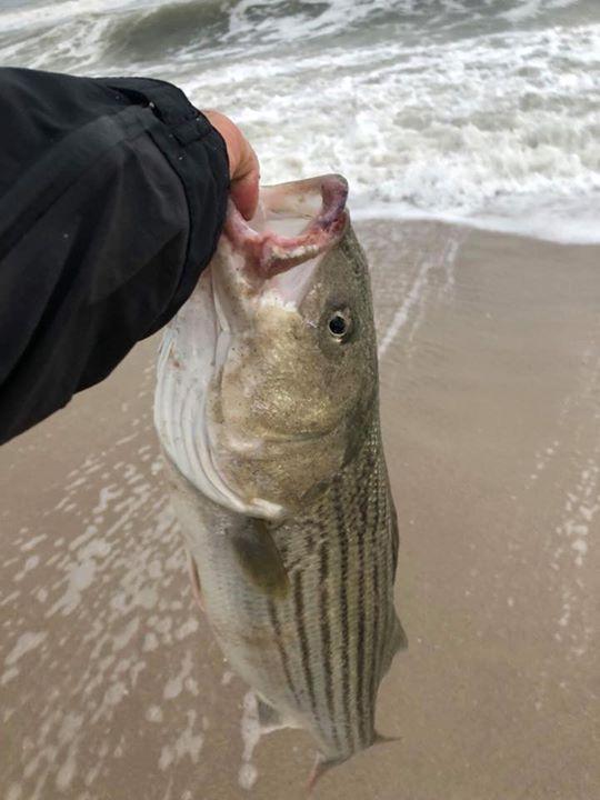 Sal Timpani 28-inch bass