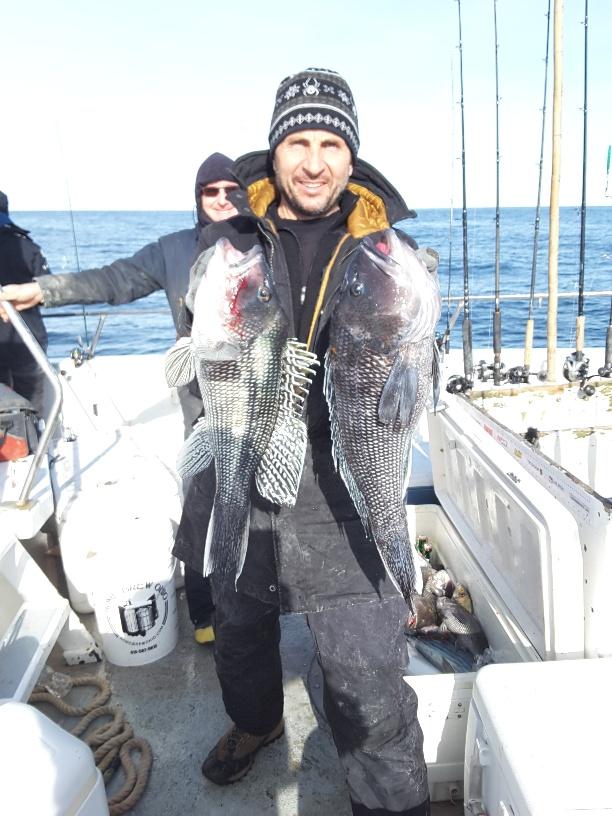 Golden Eagle sea bass