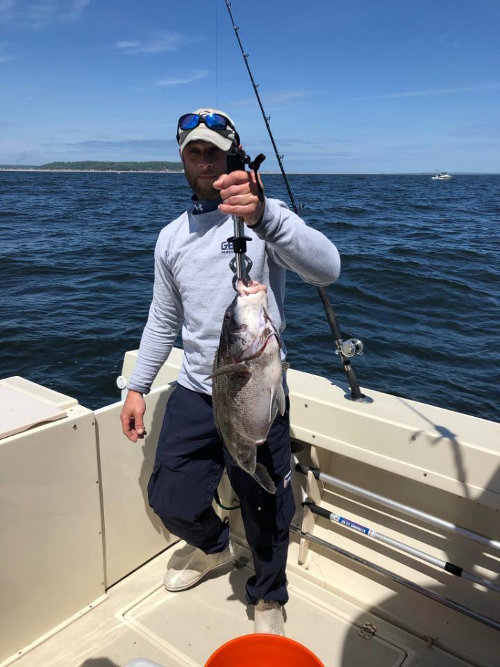 blackfish - 12 lbs